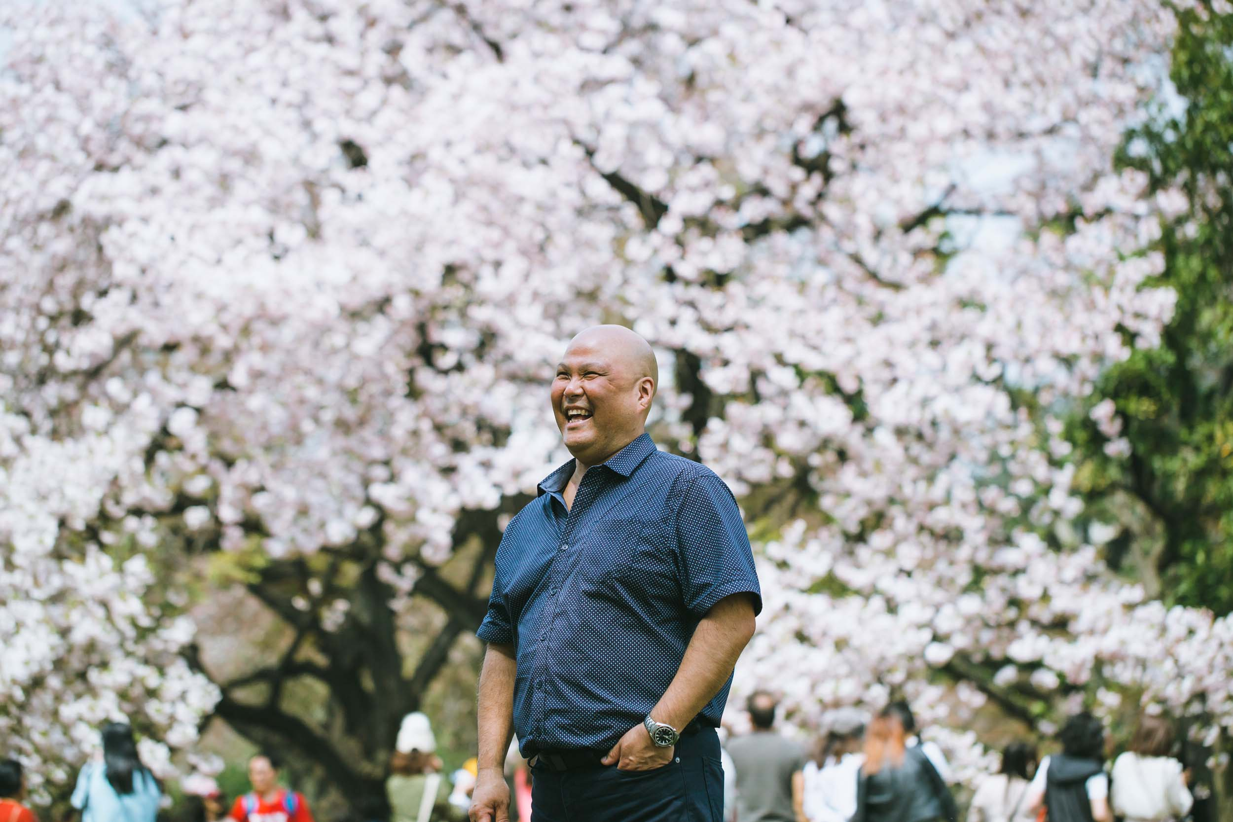 Cherry Blossom Season in Japan and What We Can Learn From It