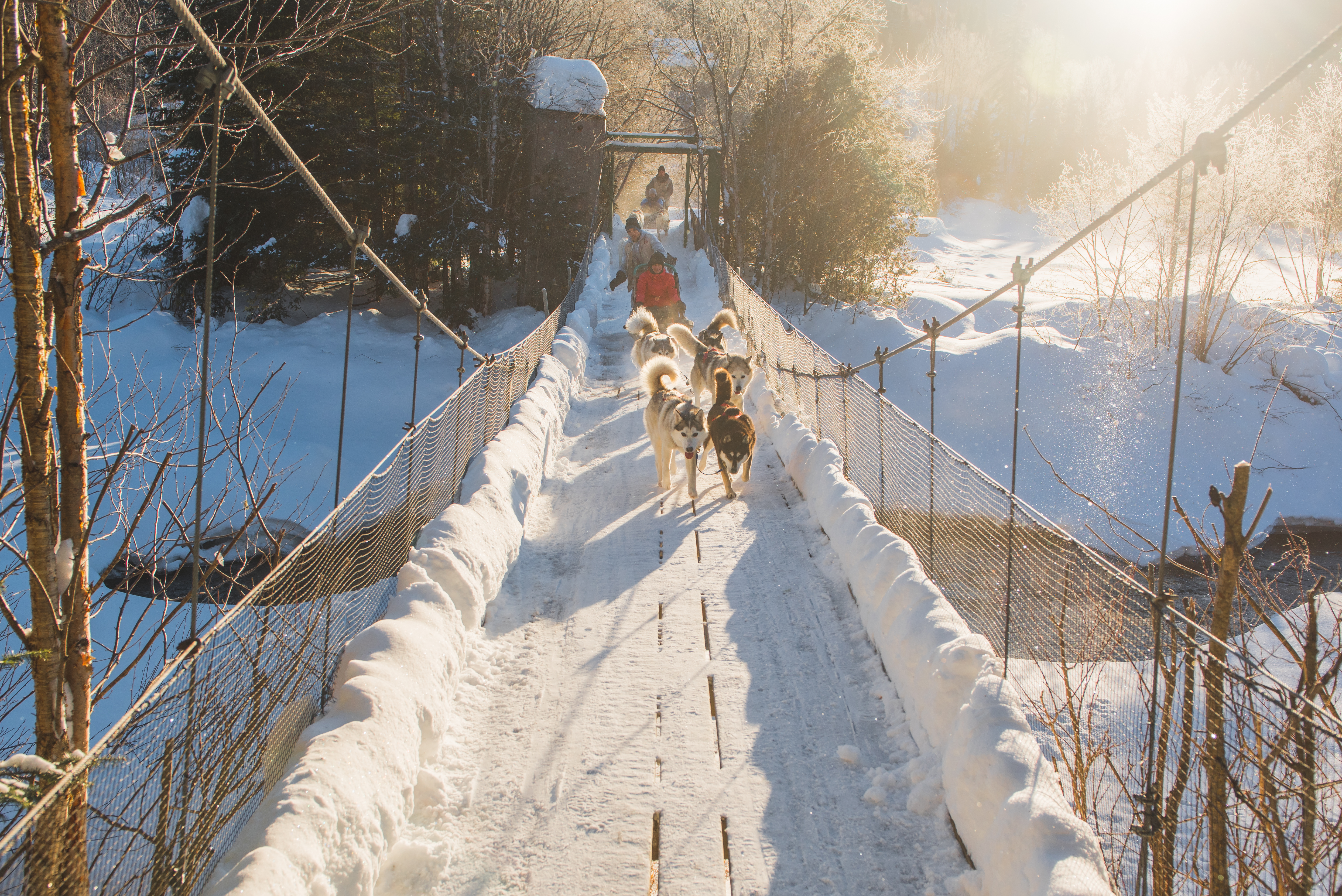 Nothing beats a dogsled ride in the sunshine. (Photo: Tourism Quebec / Francis Gagnon)